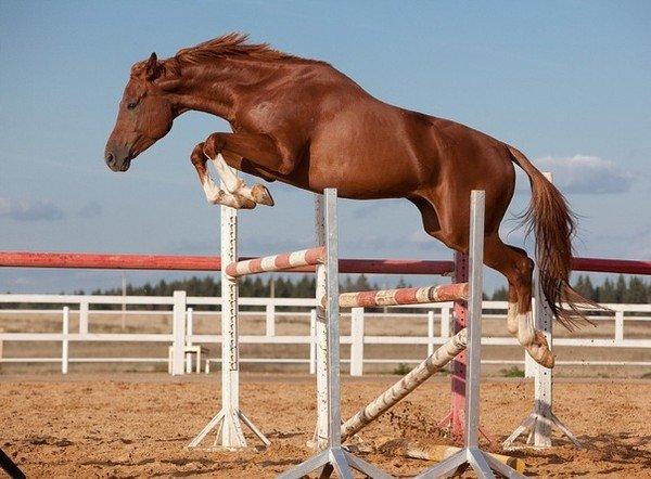 куртка лошадь в прыжке картинка стоит разобраться