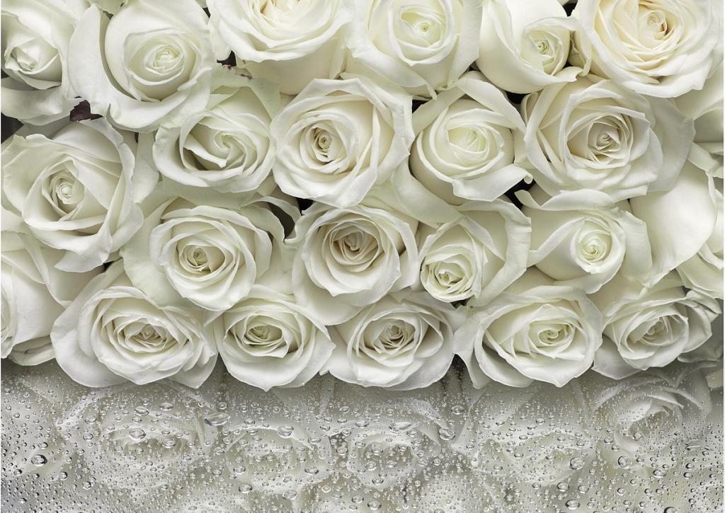 Картинки цветы розы белые и бежевые