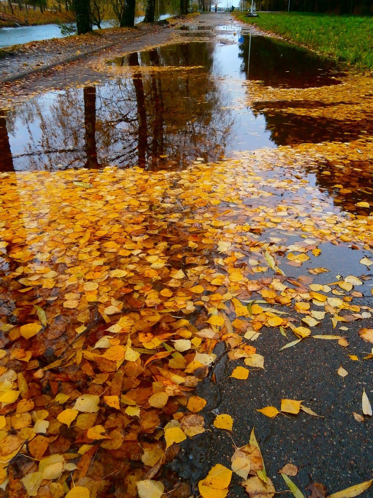 Осенние картинки с дождем