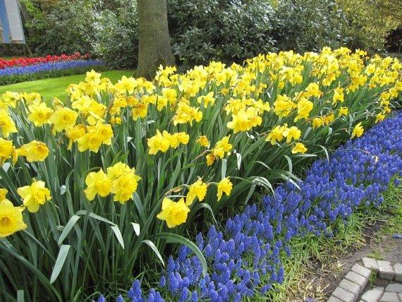Какие многолетние цветы посадить