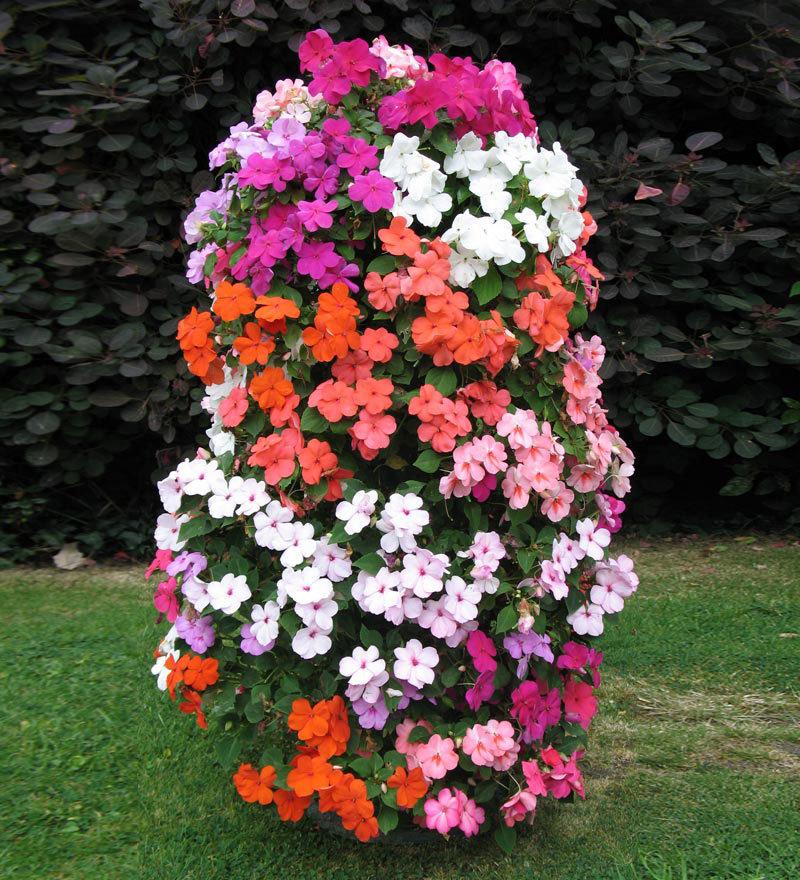 Петуния вертикальное выращивание