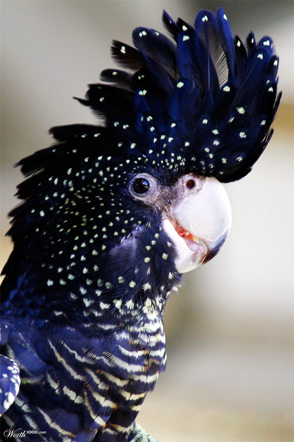 необычные попугаи