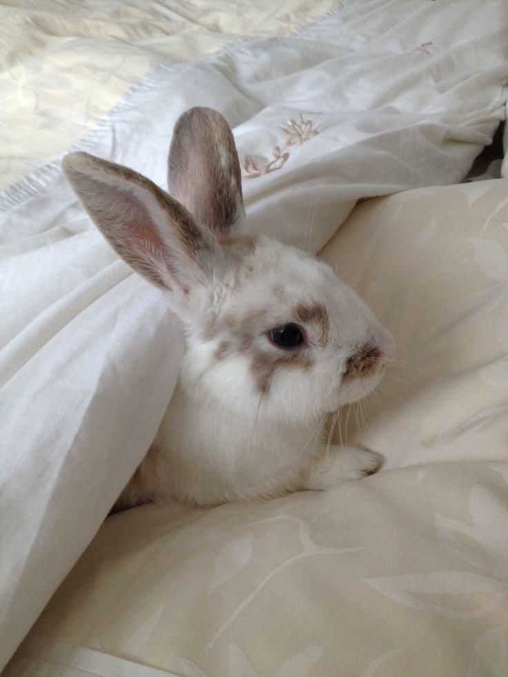 картинка зайцы на диване много