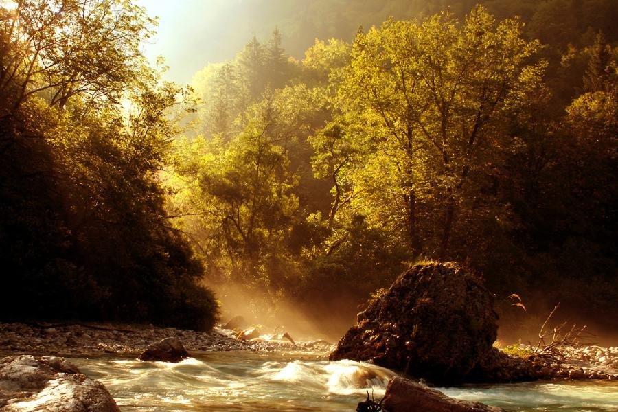 Осенний туман в лесу с утра