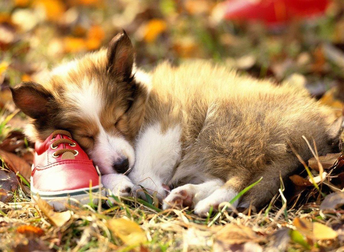 Открытка для, картинки спящие животные