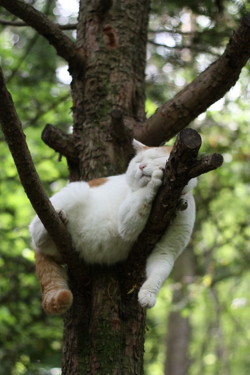 Белый кот с рыжими пятнами спит на дереве