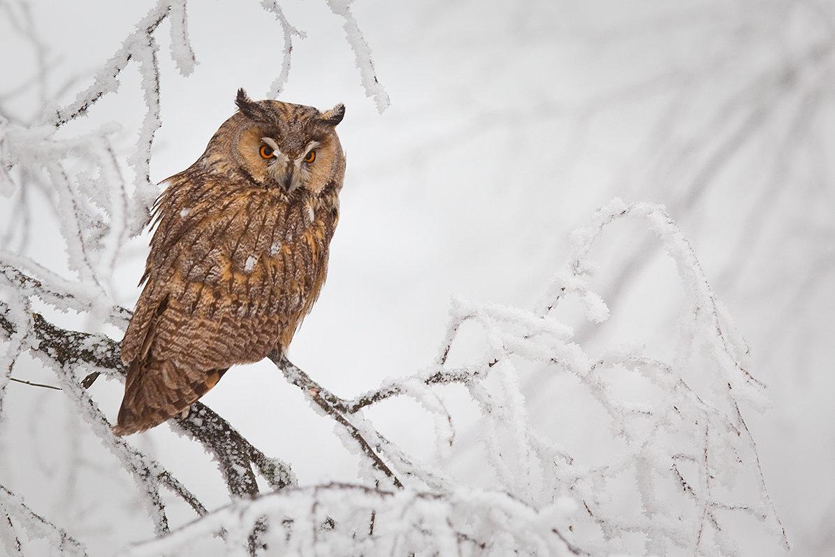 Зимние картинки сов