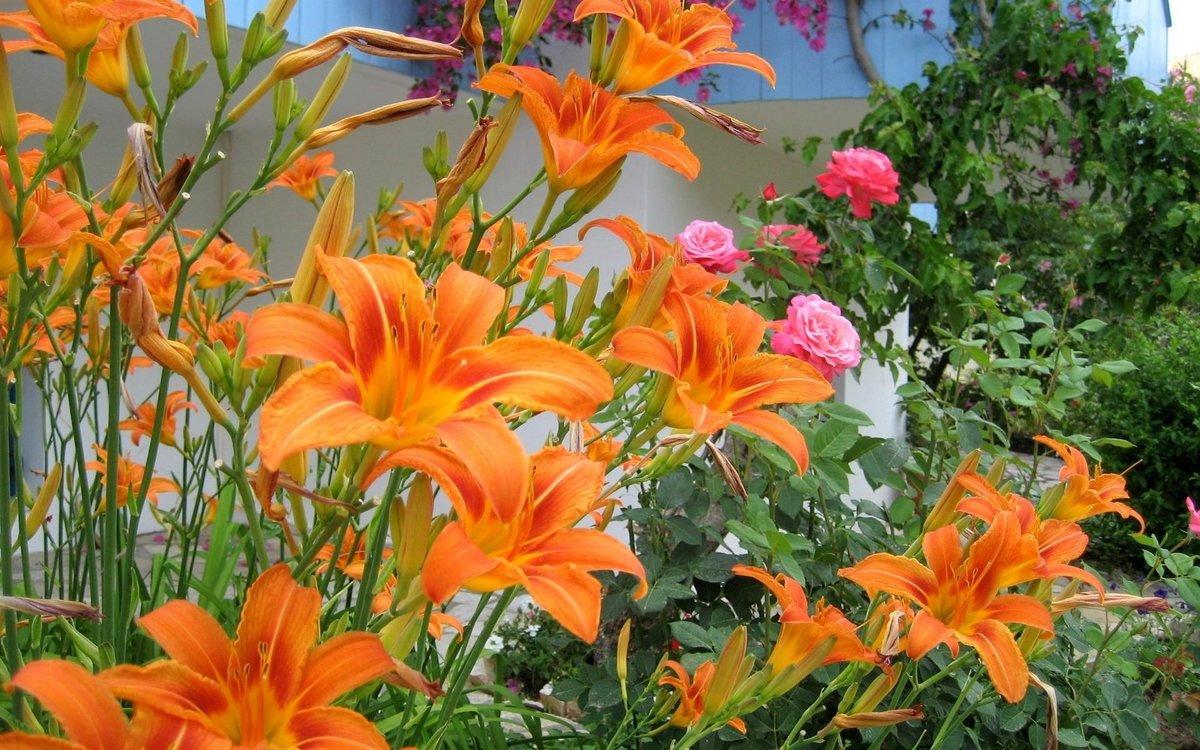 Картинки для рабочего стола садовые цветы