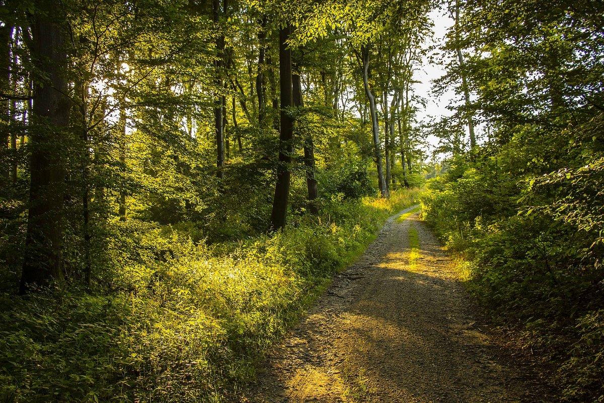 Картинки лето в лесу красивые фото