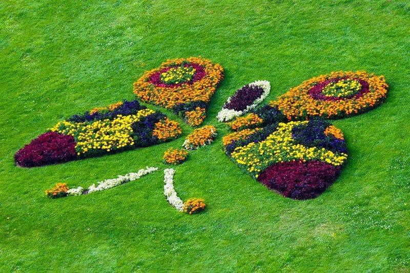 Рисунки из цветов на клумбе