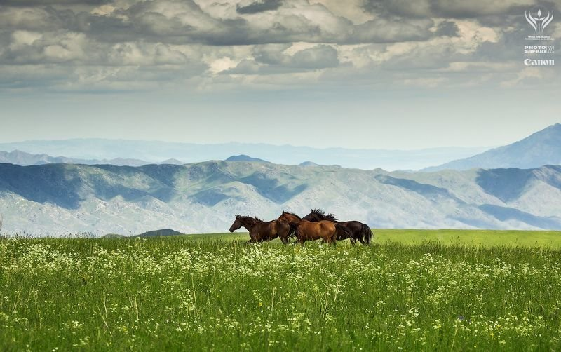 природа казахстана фото и картинки жайлау ресурсы