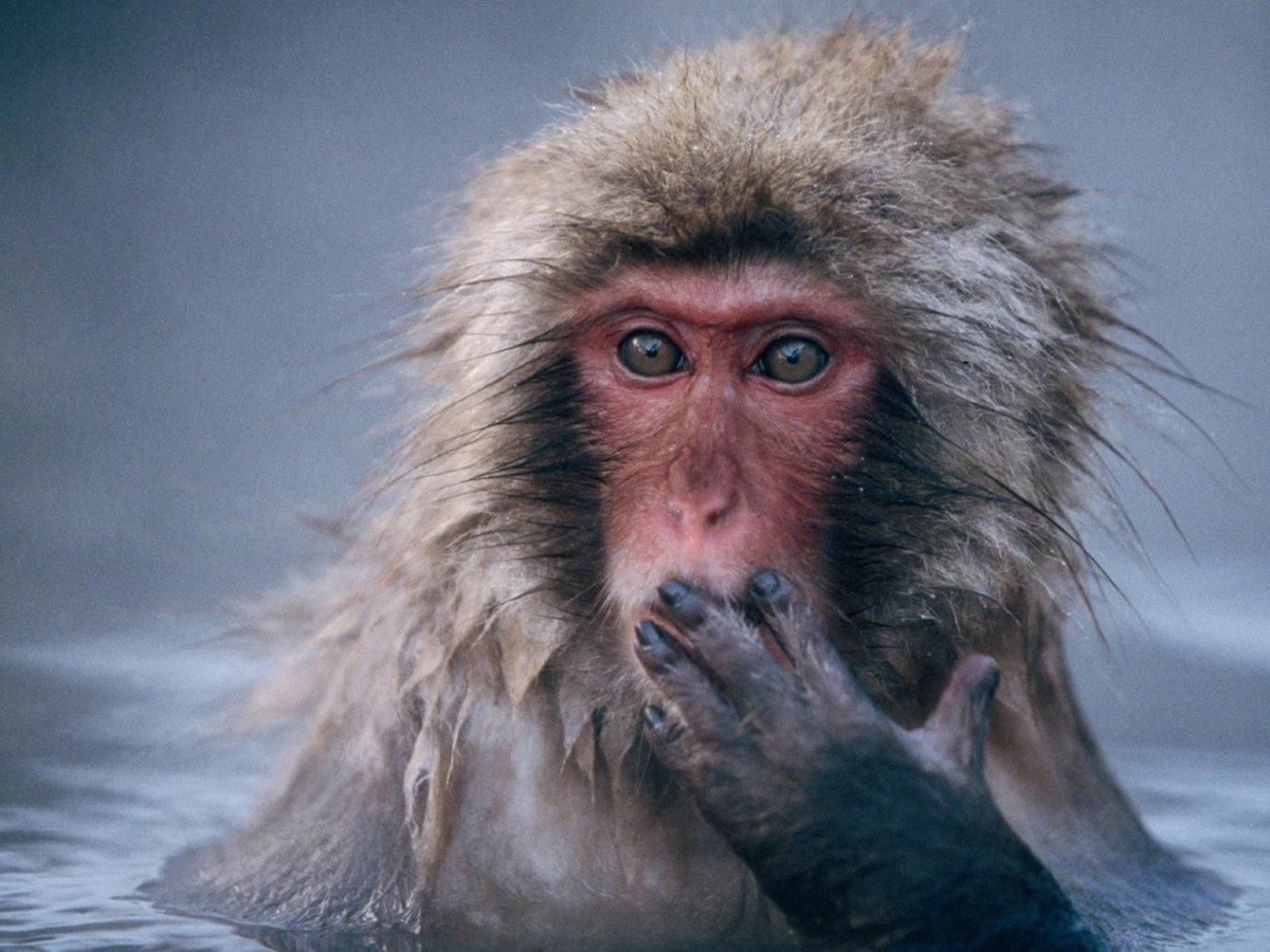 Удивление прикольные картинки с животными, картинки