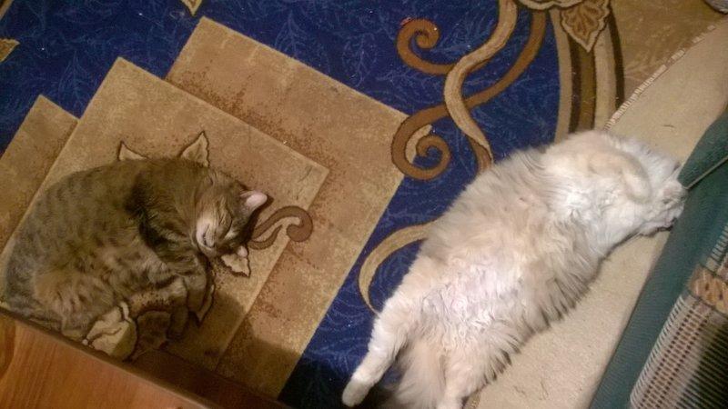 Две девушки и кот