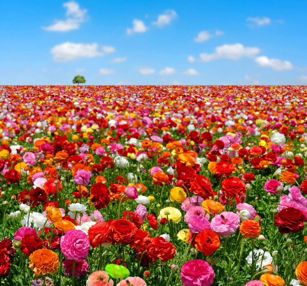 поле фото цветы