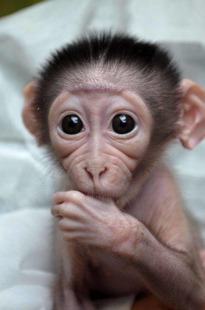 Прикольные картинки с обезьянками и надписями, одуванчиками для детей