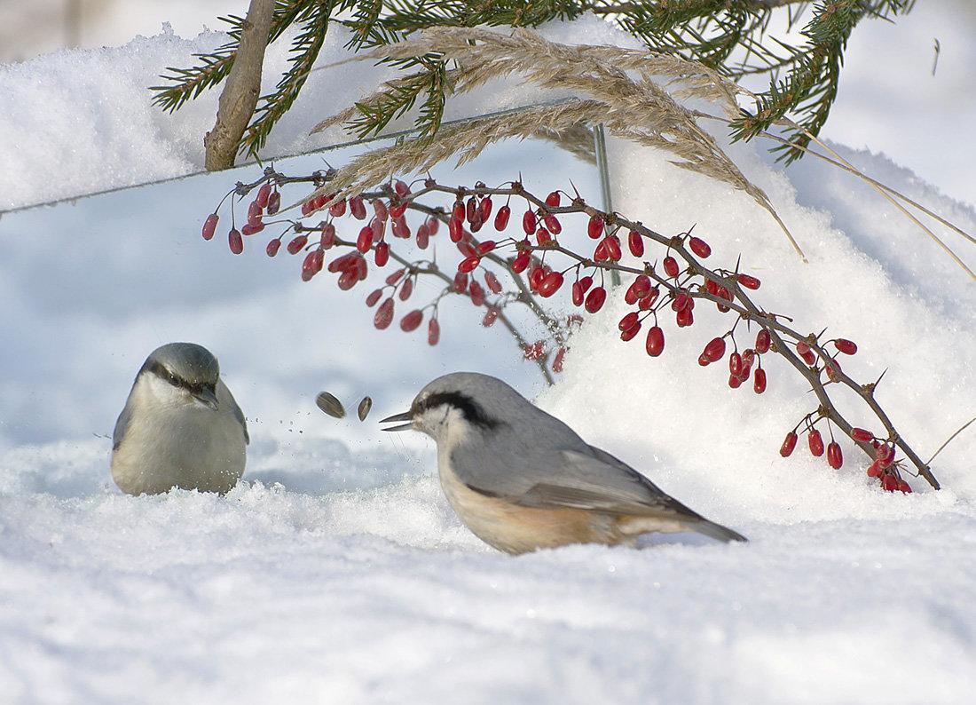 картинки лесные птички зимой как первое