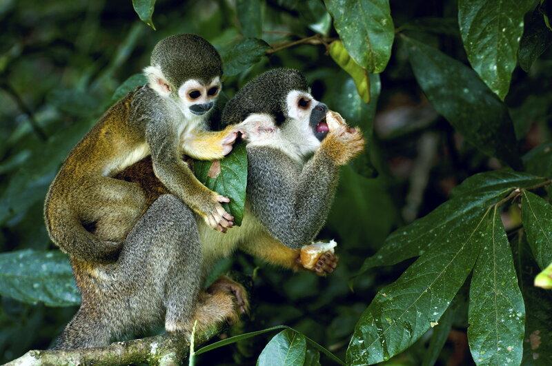Те самые обезьяны которых много в лесу