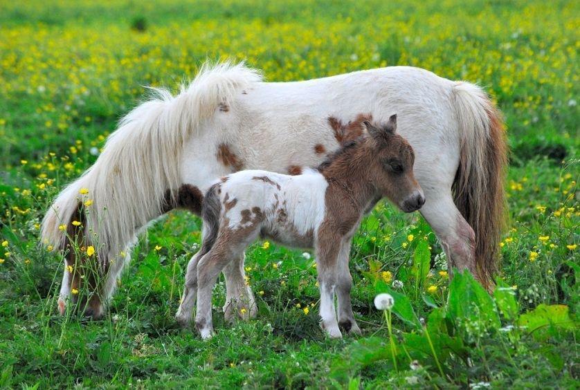 Картинки коней и пони