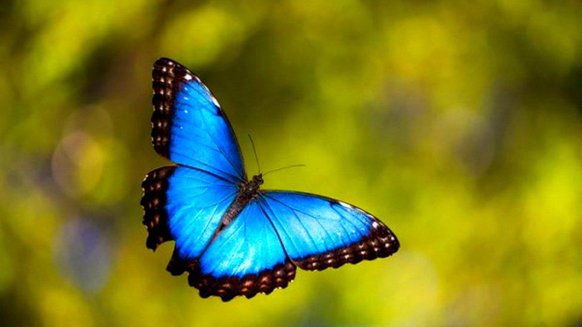 Открытка, картинки летающие бабочки
