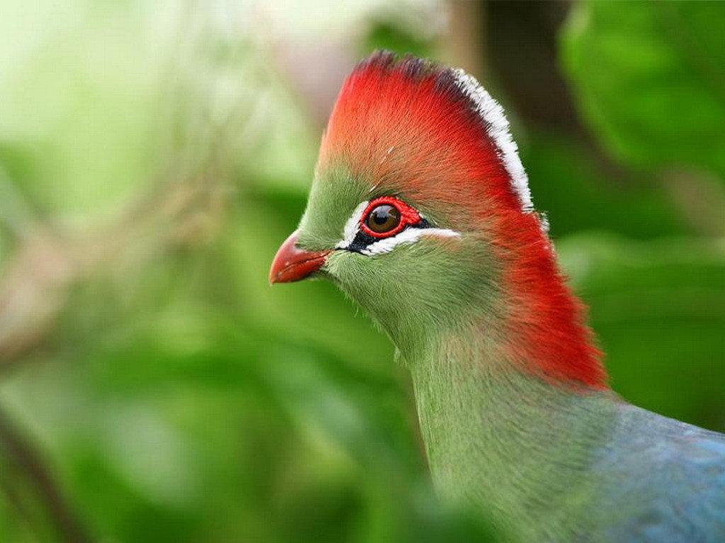 пытки экзотические птицы фото с названиями выбор других предметов