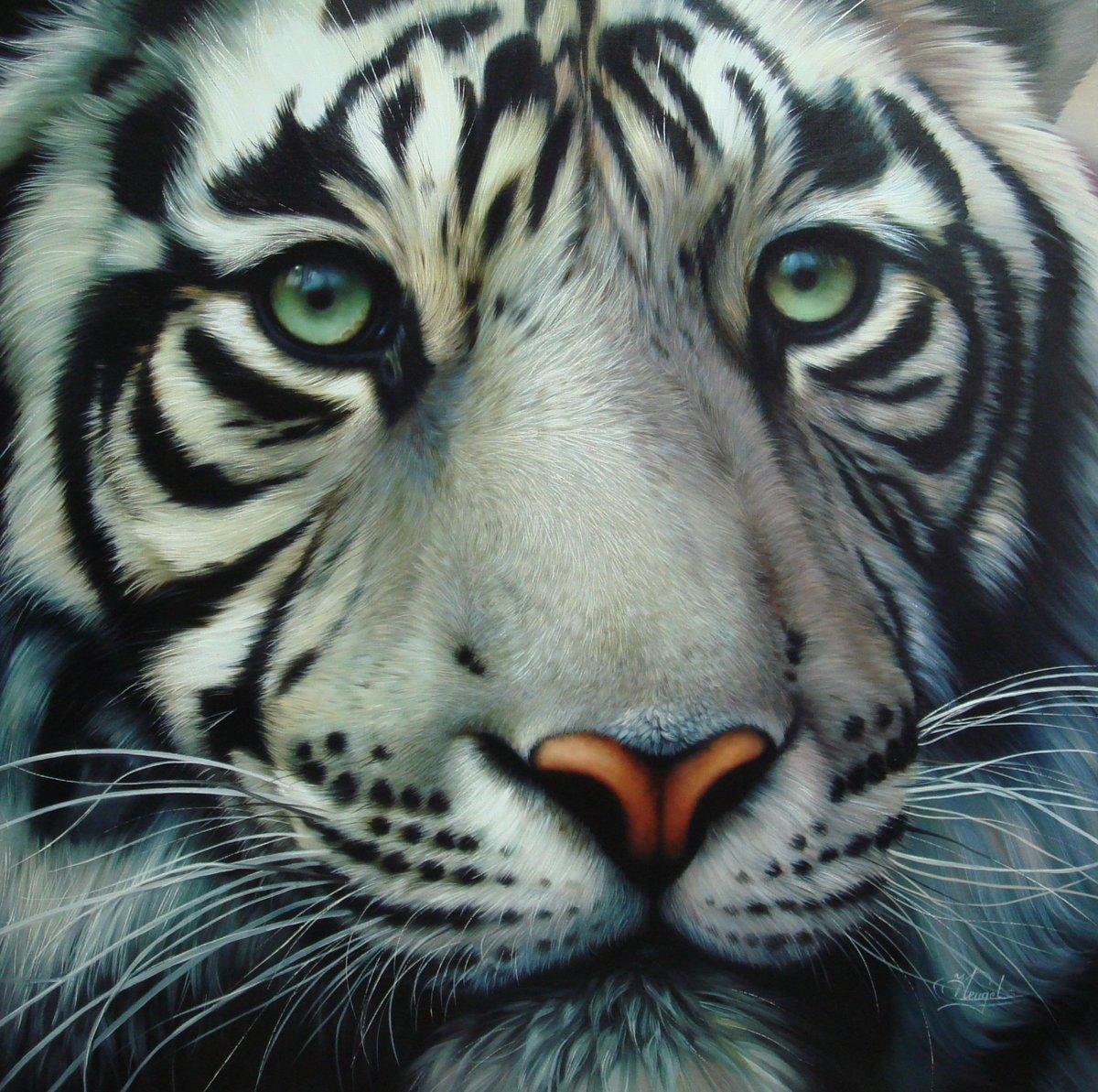 Блондин с голубыми глазами. Белый Тигр .