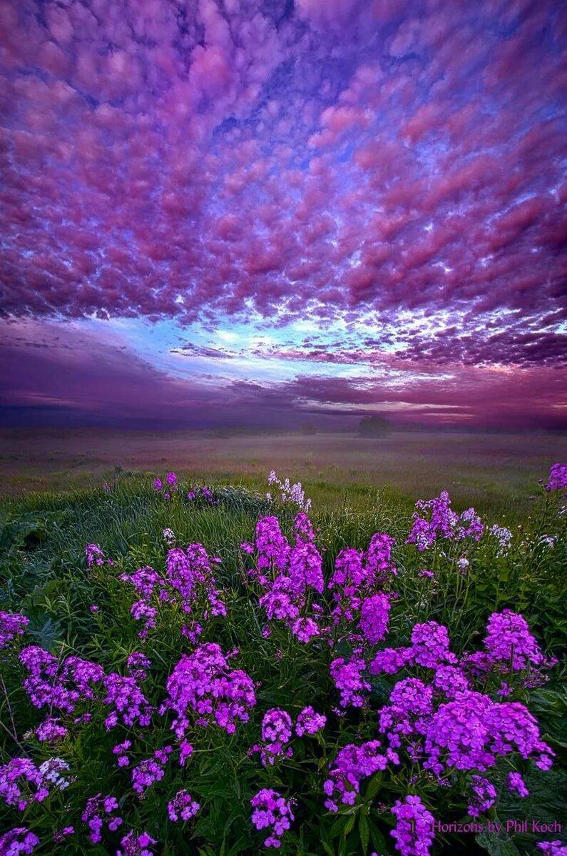 картинки фиолетового цвета фото балкон обязательный