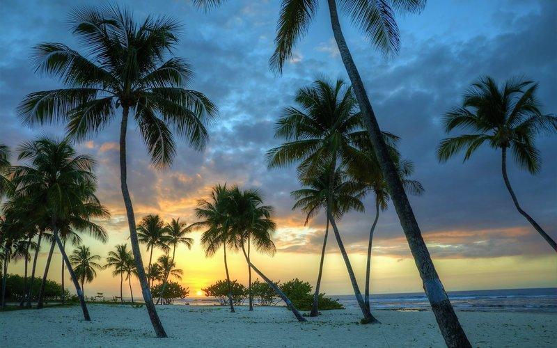 Пальмы на белом песке на закате солнца у океана