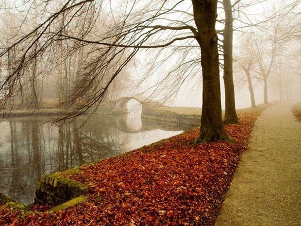 Голые деревья, осень и пруд