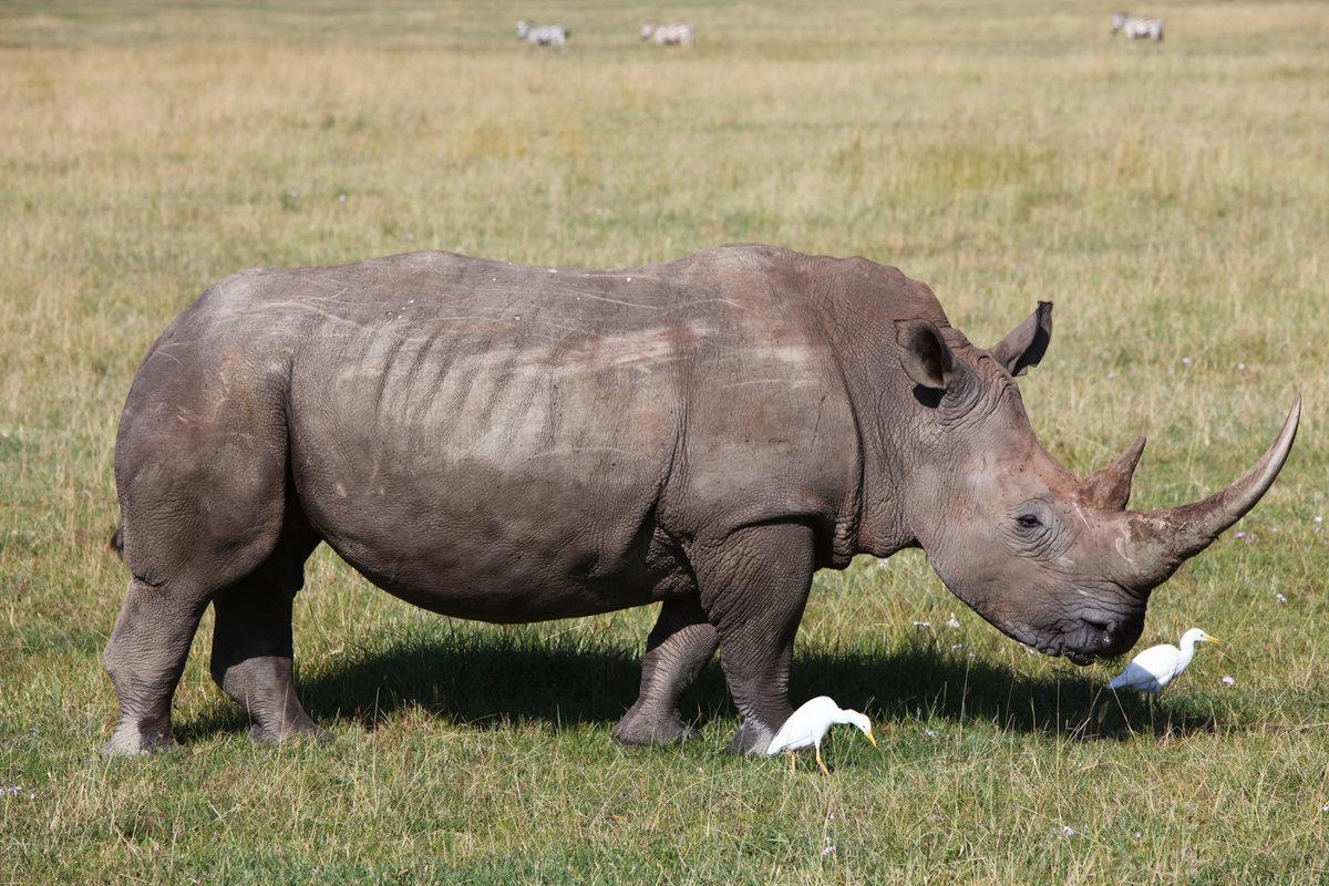 отель носорог в картинках эту страницу мобильного