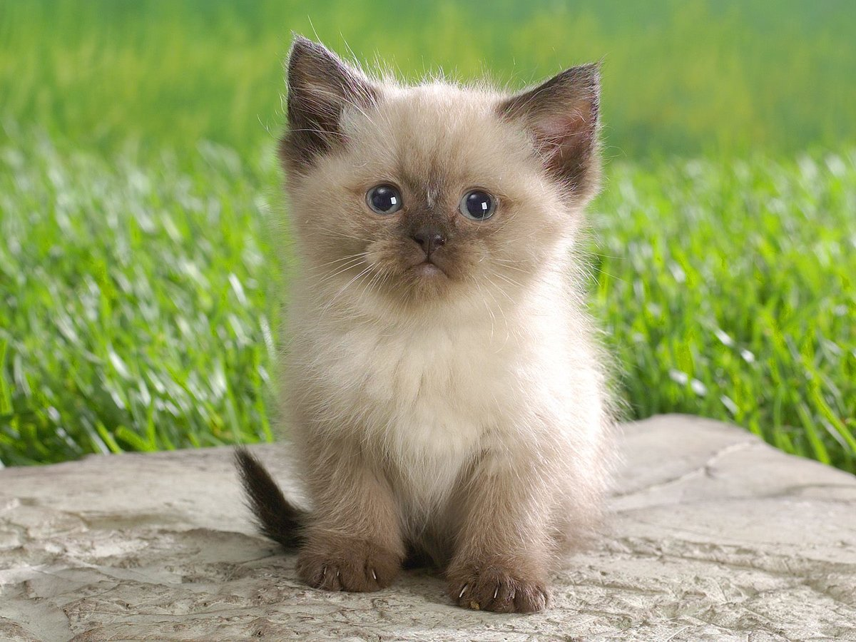 Днем рождения, картинки милые котики