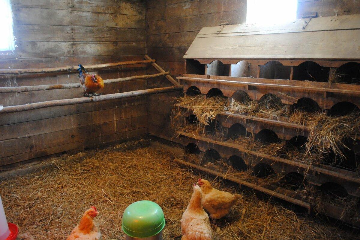 Домашняя мини-ферма в НижнемТагиле