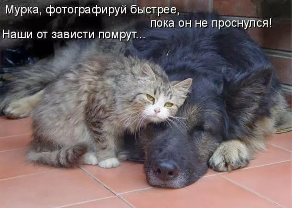 Смешные картинки про кошек с надписями до слез смешное