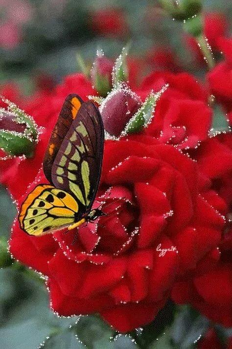 Гифки с днем рождения цветы с бабочками