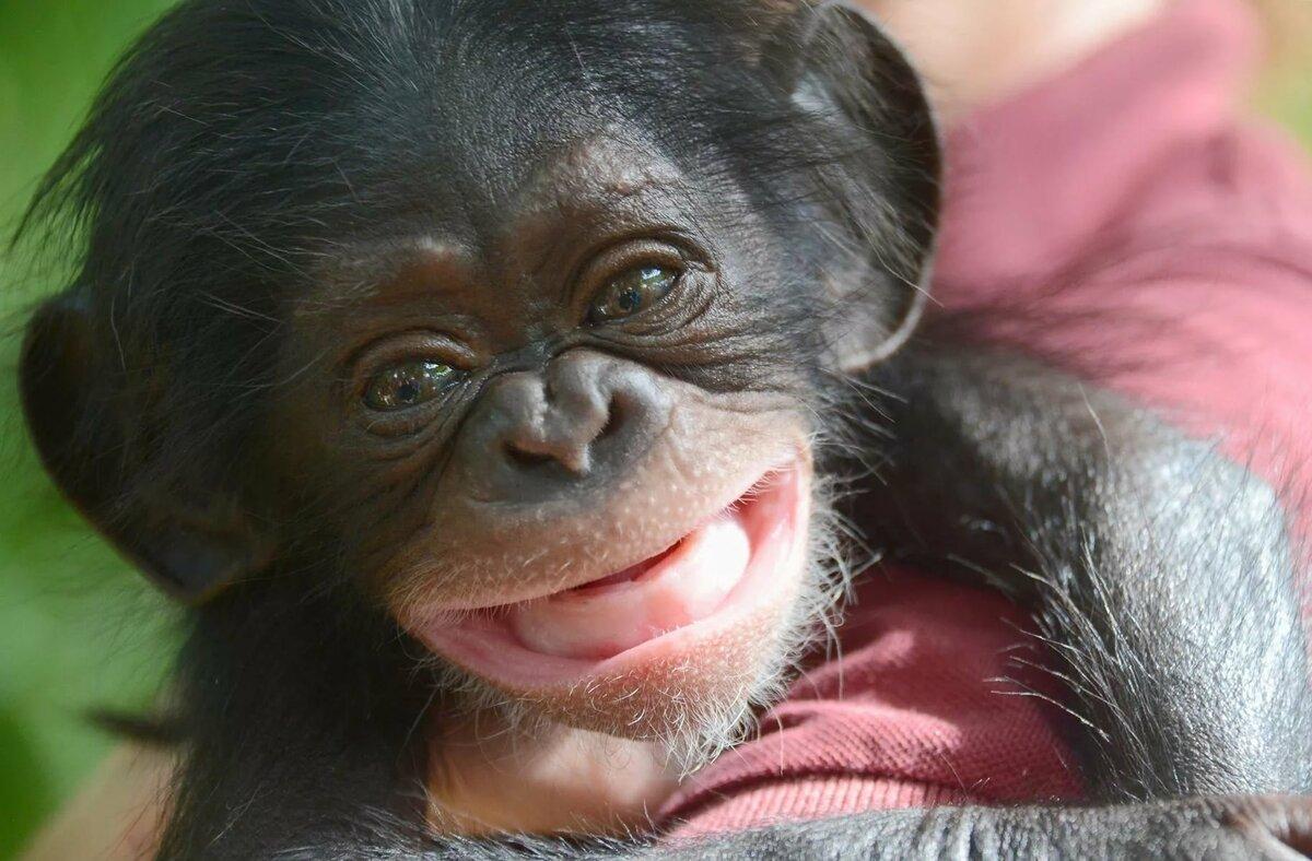 Картинки прикольные с обезьяной