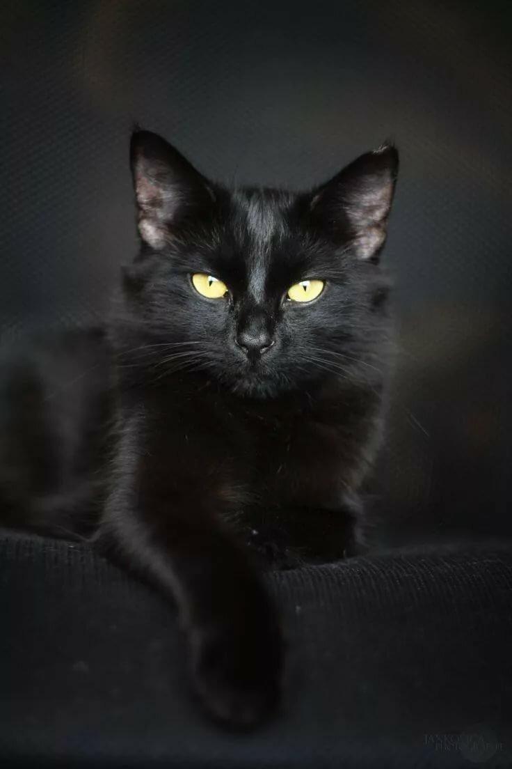событие, картинка чорного кота просит помочь розыске
