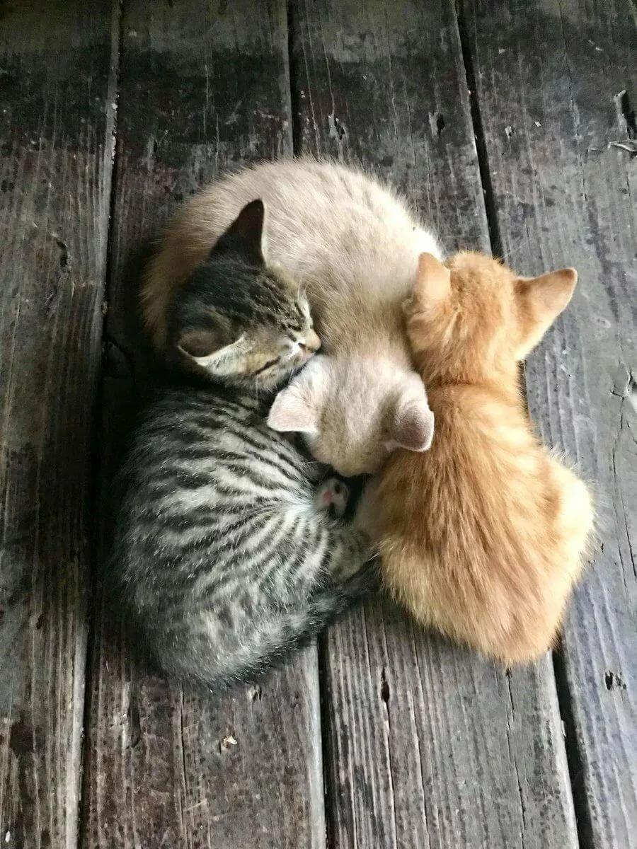 """Людмила Шелавина on Twitter: """"Животным очень нужна человеческая любовь, забота и защита... 😍 😌 🤗 💝."""