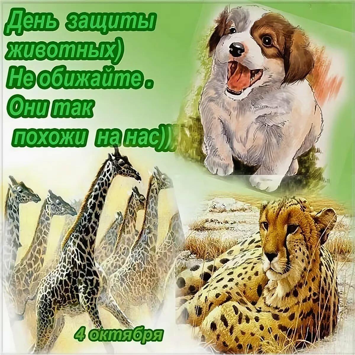 открытка день животных только