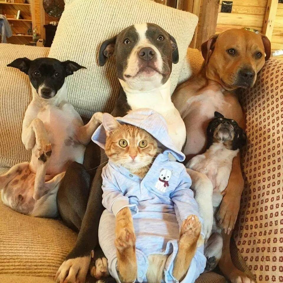 организациях дружные домашние животные фото добрый, умный хороший