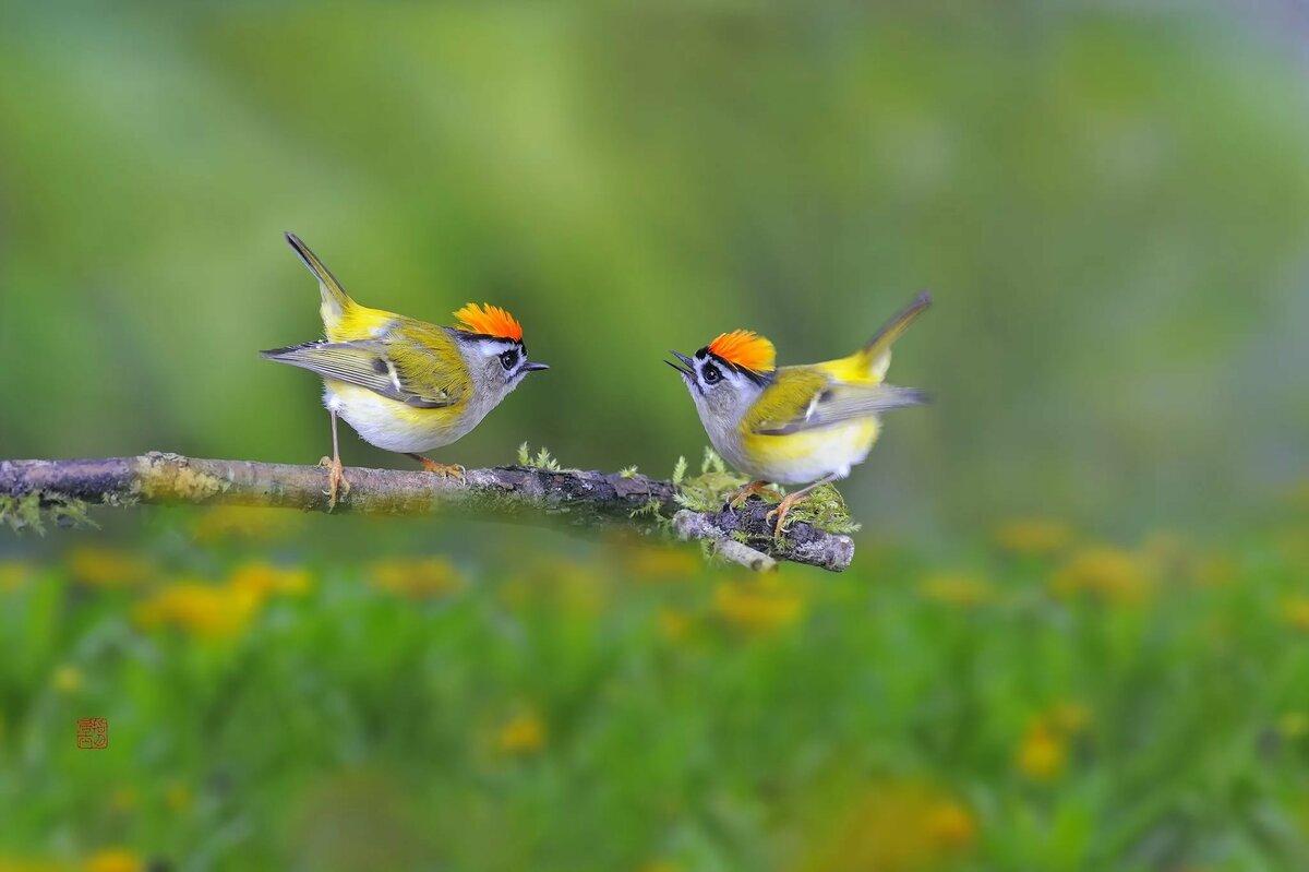 природа картинки птички какие знаменитости выглядят