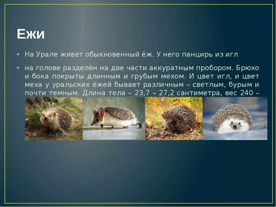 Дикие животные урала фото и описание