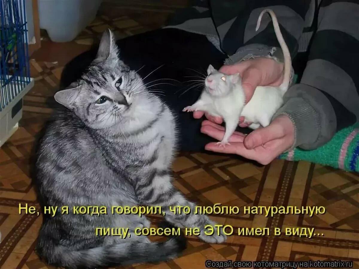 Прикольные картинки с котиками с надписями ржачные