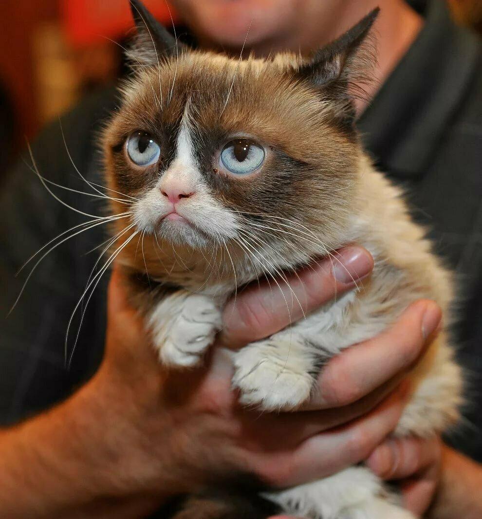 Смешные картинки животные коты