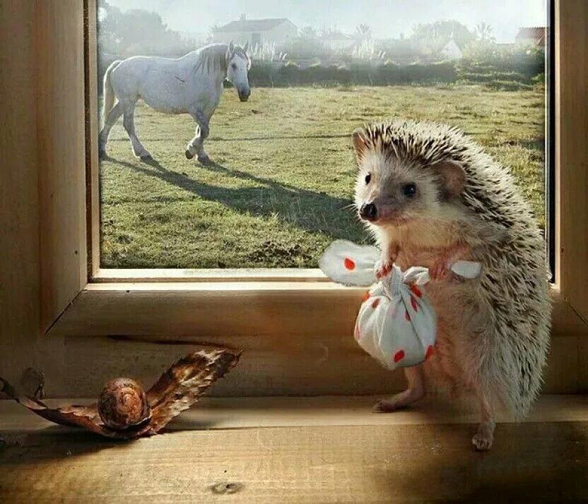 доброе утро смешные животные с цитатами противогазом баке