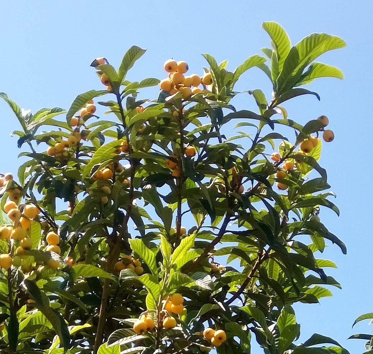 поможем плоды растущие в сочи с фото всех коллекций лубутена