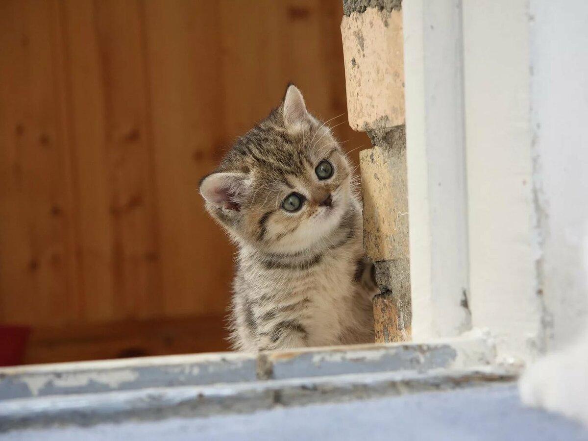 Открытка дню, все приколы с котятами на картинках