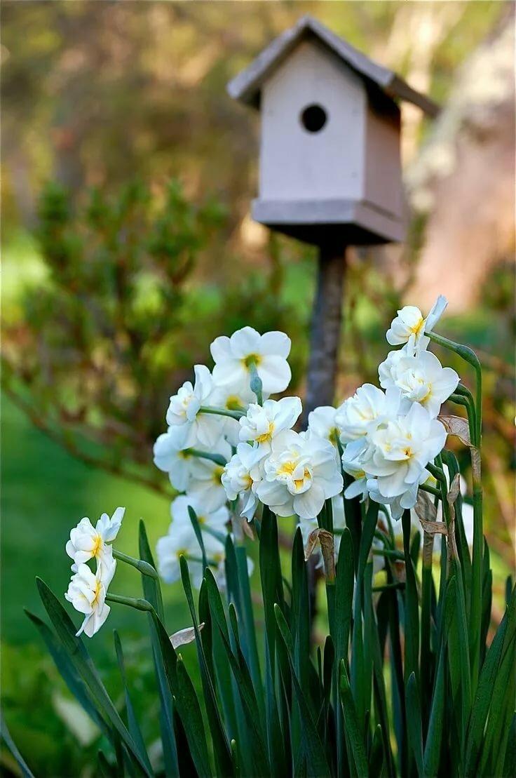Весна цветы картинки с надписями