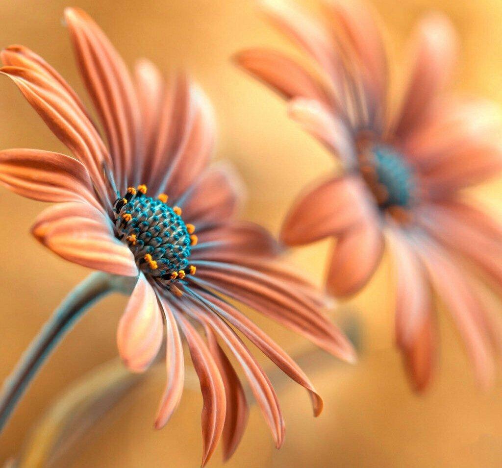 экспертиза фото фото картины цветы макросъемка стране чудес