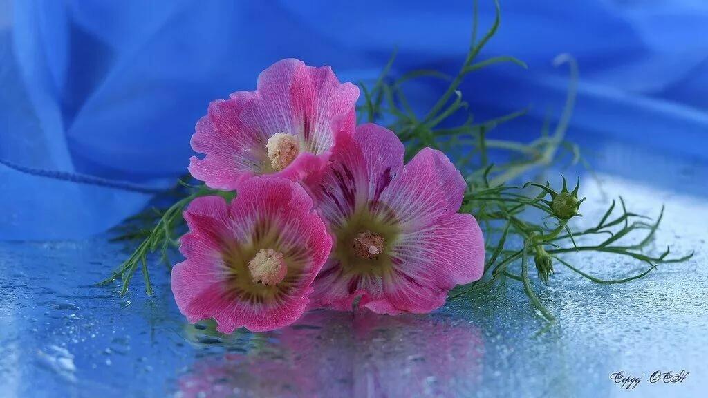 нашем картинки цветы с цитатами хорошего настроения пожелать тебе