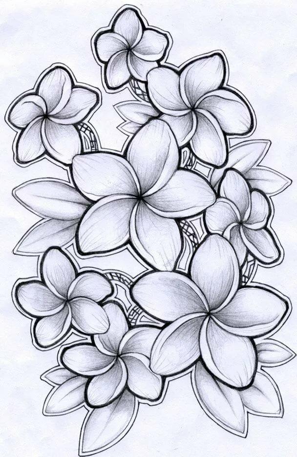 Цветочки карандашом картинки