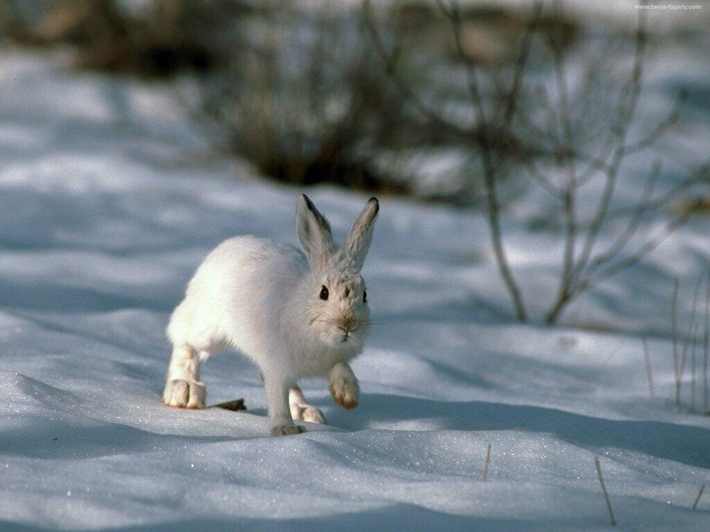 Заяц зимой картинки для детского сада